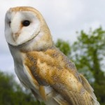 Bird Survey Cardiff