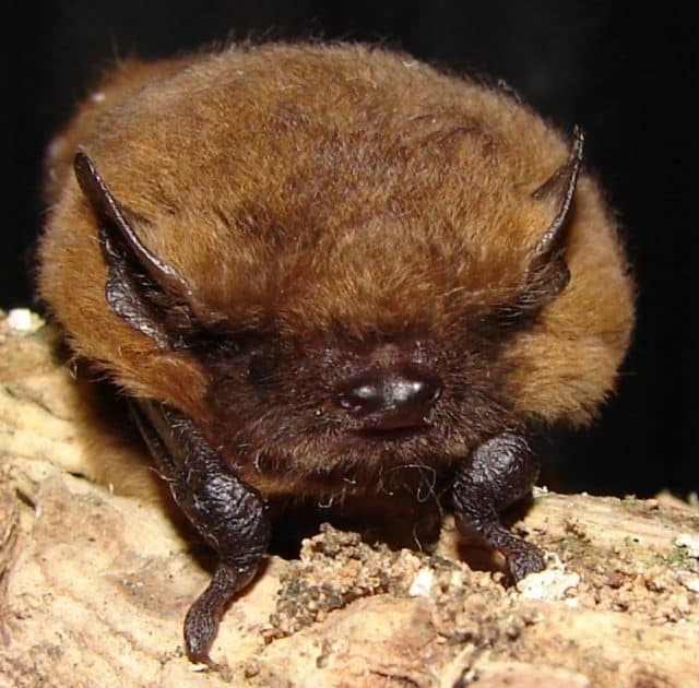 Main Bat Survey Season Ends Soon
