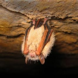 Bat Hibernation Evening Course – 5th February 2018