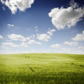 Preliminary Ecological Appraisal