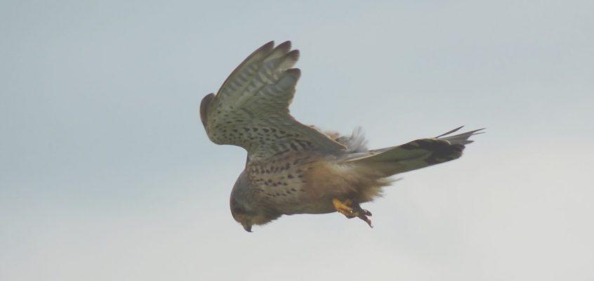 Bird Survey Techniques Course