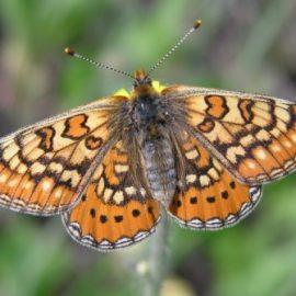 Seasonal Ecologist Job – We Are Hiring