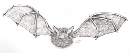 Bat Diary: Find Out What Bats are Doing Throughout the Year