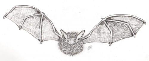 bat diary
