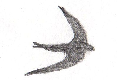 Swift Sketch South Wales
