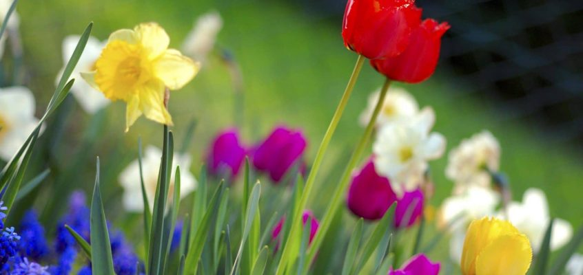 Put Some Spring In Your Garden!