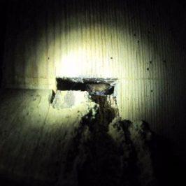 Bat Survey Methods Course – 9th August