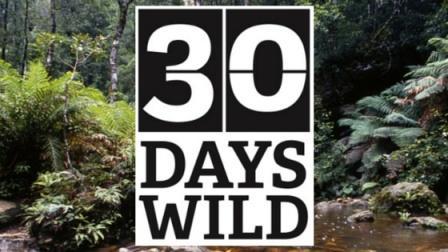 30 days wild bat survey