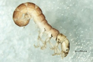 Aquatic Macroinvertebrate Survey