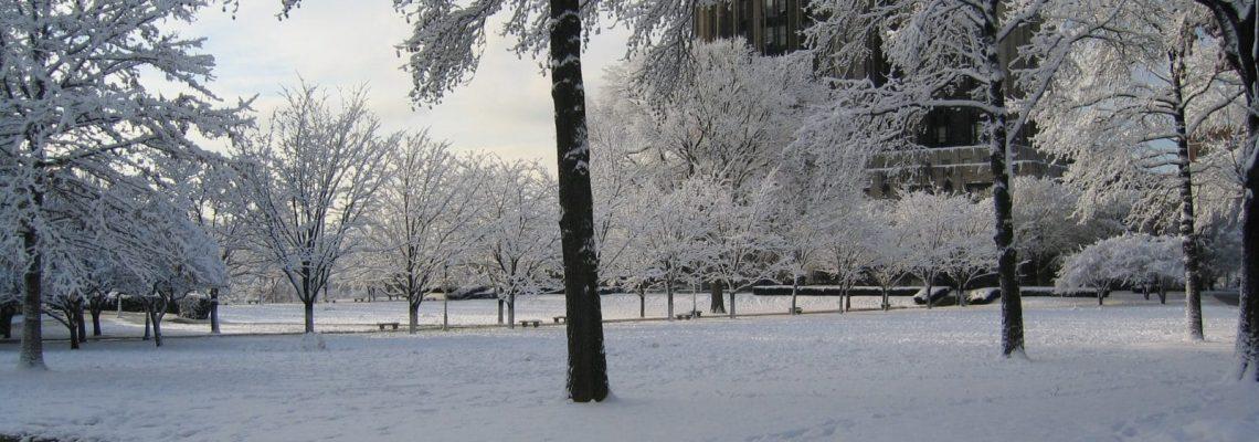 Winter Ecological Surveys