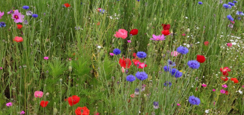 Hay Meadow Plant Identification 21st June 2017