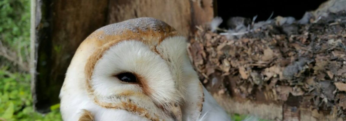 Barn Owl Course: 21st February 2017