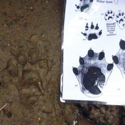 Otter Survey Tracks