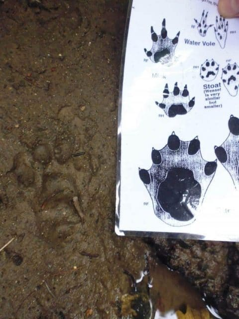 Otter Survey Tracks