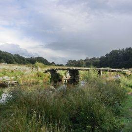 Ecology Survey Dartmoor