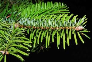 fir identification