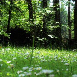 Phase 1 Habitat Survey Malvern, Worcestershire