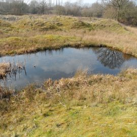 Great Crested Newt Survey Kidderminster, Worcestershire