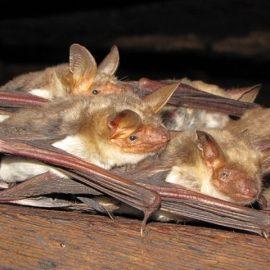 Bat Survey Lydney