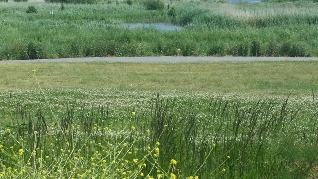 Extended Phase 1 Habitat Survey Cotswolds