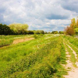Extended Phase 1 Habitat Survey Worcester