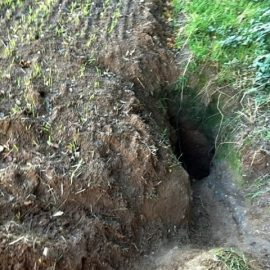 Badger Survey Carmarthenshire