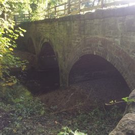 Bridge Repair Project at Coleg Gwent – Bat Mitigation Successfully Implemented