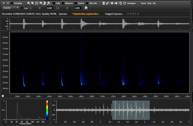 Bat Sound Analysis: Using BatSound and BatExplorer