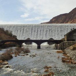 Ecological Services in Tunnels, Bridges and Culverts