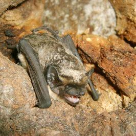 Identifying British Bats