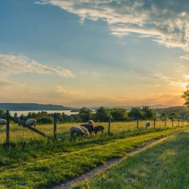 Farming and Ecology