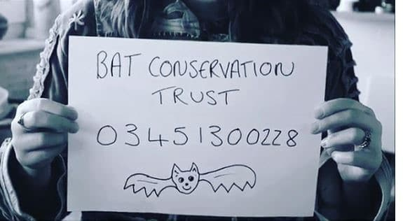 BCT Emergency Number. Reference: Ashley Dale, Bristol Bat Care, 2018