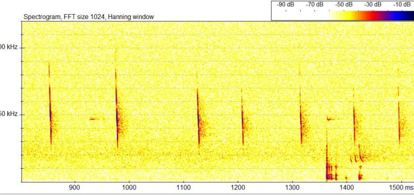 BatSound echolocation file