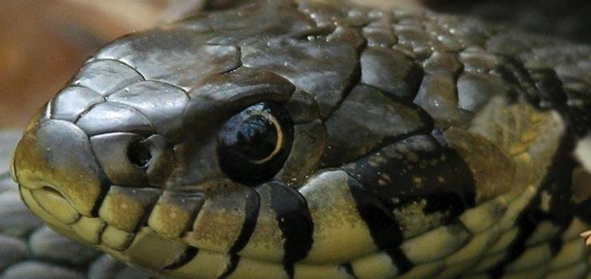 reptile survey glamorgan