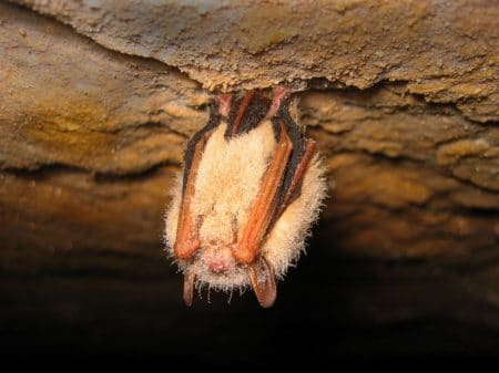 bat survey winter