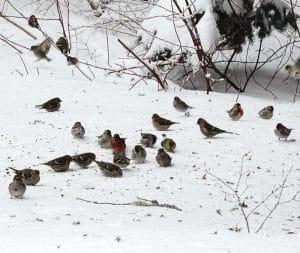 winter ecology survey