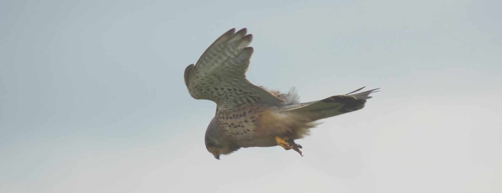bird survey south wales