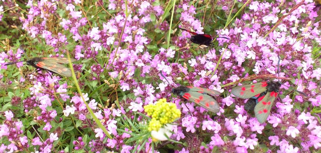 invertebrate survey south wales
