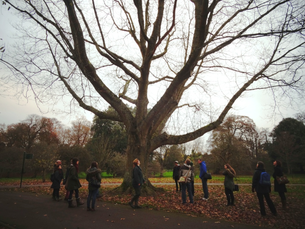 tree survey inspection course