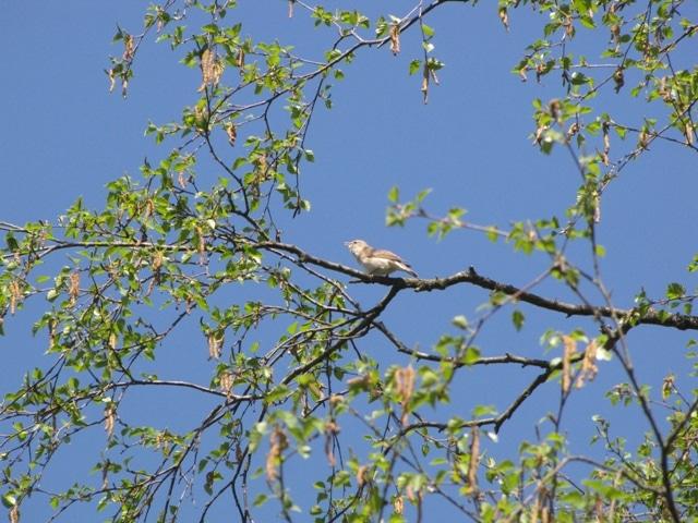 Bird Survey Reading