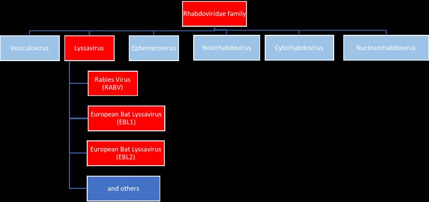 Rhabdoviridae family tree